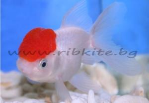 Червена шапка- XXL